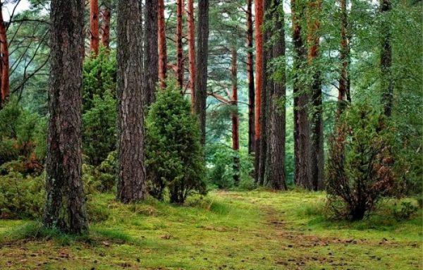 Estudiar Ingeniería Forestal