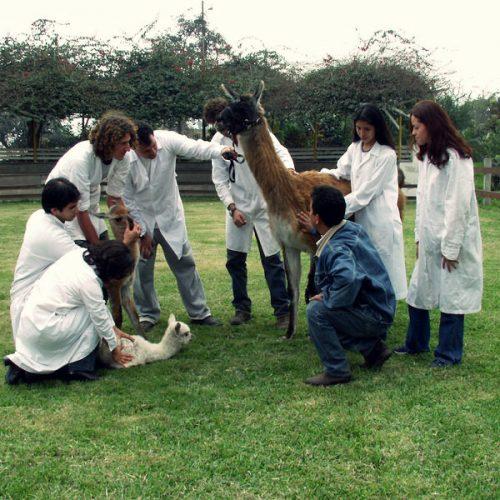 Estudiar Ingeniería Zootecnista