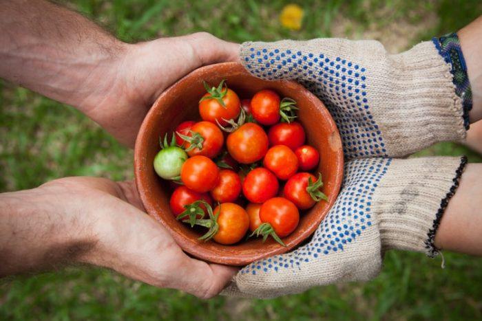 Estudiar Ingeniería Agroindustrial en Perú
